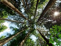 Forest or wood upward sunlight. View of forest or wood upward sunlight Stock Photos