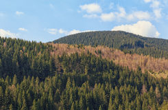 View of a forested mountain in Harz Germany Royalty Free Stock Image