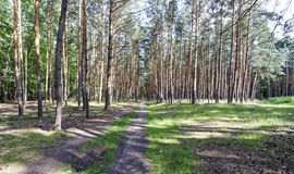 A view of forestland with multiple trees Royalty Free Stock Photography