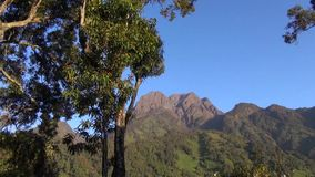 View of forests on the hills the Rwenzori Mountains stock footage