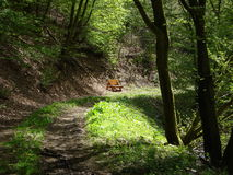 A view of a forrest trail in Luxembourg Royalty Free Stock Image