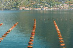 View of a fragment of an oyster farm in Kotor Bay near the town of Perast in the background, Montenegro. stock image