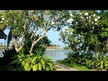 View with frangipani trees. Over lake at Stock Photos