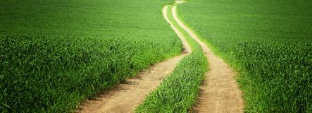 View of fresh grass and road in the field. freedom and renewal concept. View of fresh grass and road in the field. freedom and renewal concept Stock Image