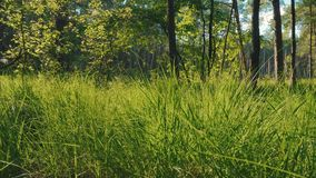 View of the fresh green grass and trees in the forest. Beautiful view of the grass and trees in the forest in summer stock video footage