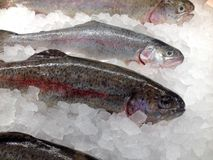 Seafood in the store. View at the fresh rainbow trout whole on the ice in the store display case Stock Photo