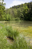 View on freshwater pond Stock Photography