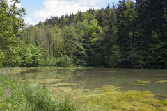 View on freshwater pond Royalty Free Stock Photo
