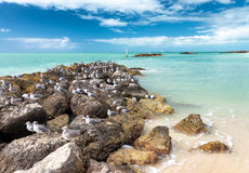 View From The Fort Zachary Taylor Historic State Park In Key West, Florida. Rocks With Seagulls Stock Photo