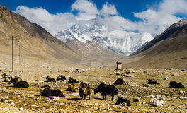 View From The Tibetan Plateau On Mount Everest Royalty Free Stock Photo