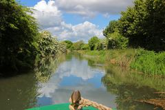 View from the front of a canal boat cruising along the Basingstoke Canal. Cruise along the Basingstoke Canal in a canal / long boat, scenic view from the front Royalty Free Stock Image