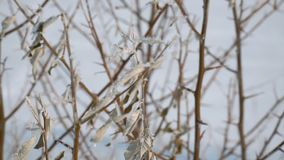 View of frozen dry leaves. Winter picture. Selective focus stock video
