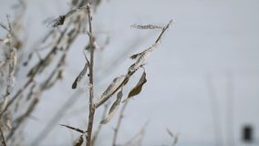 View of frozen dry leaves. Winter picture. Selective focus stock video footage