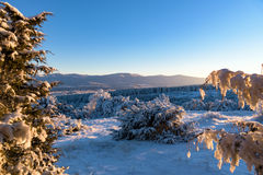 View on frozen mountain and forest covered in sunset light throu Royalty Free Stock Photo