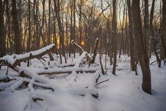 View of frozen trees in Ontario provincial park during winter ti Royalty Free Stock Photography