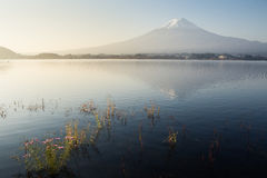 View of Fuji mountain from Kawaguchiko lake Royalty Free Stock Image