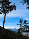 View of Fuji mountain with white snow top and blue sky backgroun. D through evergreen trees in the morning light scene Royalty Free Stock Photography