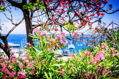 View of Funchal port through the blooming flowers. Madeira Stock Photo