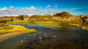 View of the Galapagos Stock Images