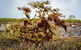 View of the Galapagos royalty free stock images