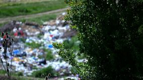 View of garbage through a tree branch.  stock video footage