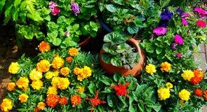 Patio summer bedding plants. View of garden containers full of summer bedding plants royalty free stock photography