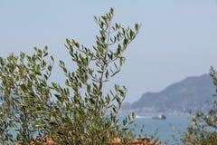 View through the garden onto the sea royalty free stock photos
