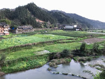 view of gardens and rice fields near river Royalty Free Stock Image