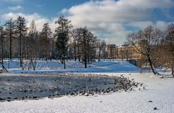 View of the Gatchina Palace from the White Lake. Winter. In the water of the pond there are many birds - ducks and Royalty Free Stock Images