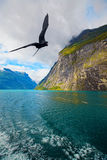 View of Geiranger. The Geiranger fjord in Norway, surrounded by high mountains Stock Photography