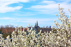 View of Georgetown University in spring blossom. Royalty Free Stock Photos
