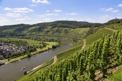 View of German river Moselle near Punderich Royalty Free Stock Image