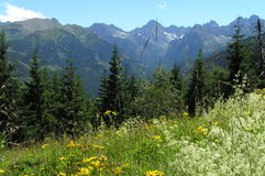 A view from Gesia Szyja in Tatra Mountains. The most beautifull mountains on the world Stock Photo