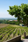 The View from Gigondas. View of vineyards and the Provençal countryside from the village of Gigondas stock photos