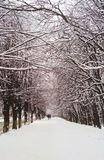 Girls walking in a winter snowy park royalty free stock images