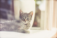 View through glass of a tabby kitten Stock Image