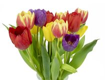 Glass vase and Tulips Stock Photos