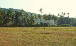 View of Goa nature in India Royalty Free Stock Photos