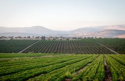 View of the Golan Heights in the summer . Stock Images