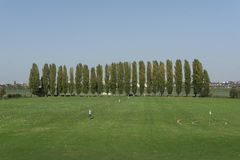 View of the golf course with a number of poplars royalty free stock photos