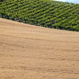 View of grain fields and vineyards on rolling hills of Abruzzo. Italy royalty free stock photos