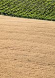 View of grain fields and vineyards on rolling hills of Abruzzo. Italy stock photography