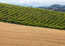View of grain fields and vineyards on rolling hills of Abruzzo. Italy stock photo