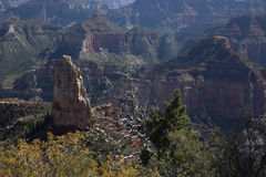 View Of The Grand Canyon From The North Rim Royalty Free Stock Photography