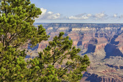 View of Grand Canyon from rim trail. At south rim road, Arizona, USA. Pine tree on the foreground and Canyon on the background stock images
