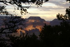View of the Grand Canyon with Trees. Grand Canyon at sunset with trees in foreground Royalty Free Stock Image