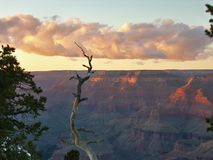 A tree at Grand Canyon. View on the Grand Canyon royalty free stock photography