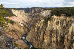 View of the Grand Canyon of Yellowstone royalty free stock photos