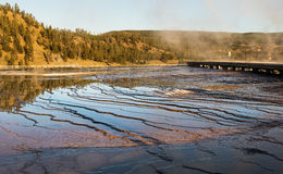 View of the Grand Prismatic Spring  at Yellowstone national park,WY,USA. Grand Prismatic Spring at Yellowstone national park,white steam,reflection,mountains Royalty Free Stock Image