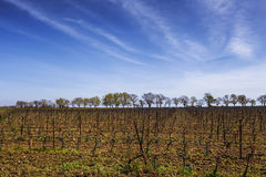 View of the grape lands Royalty Free Stock Image